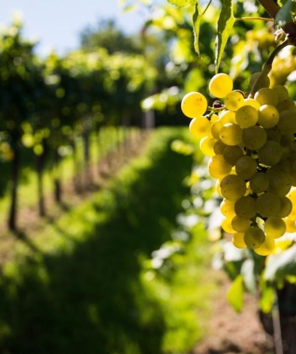 Вино «Южное Настроение»