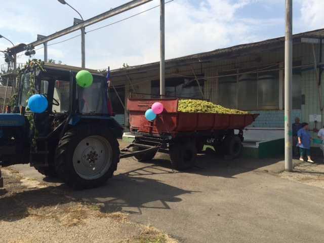 Крымский винзавод 2016 встреча лодочки винограда